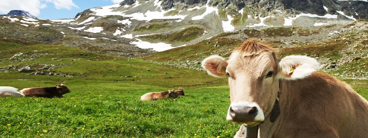 slider-agricoltura-di-montagna-allevamento