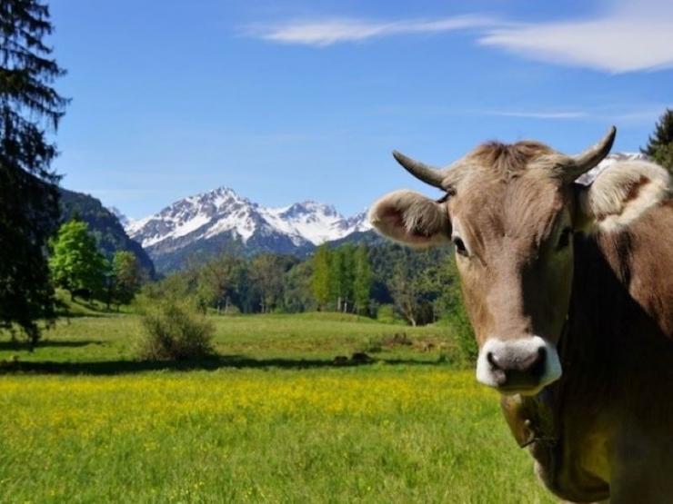 Gestione dei pascoli alpini e cambiamento climatico… maggiore sostenibilità!!!