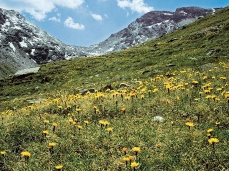 Impatto del cambiamento climatico sulla biodiversità dei pascoli alpini: dalla realtà agli scenari futuri